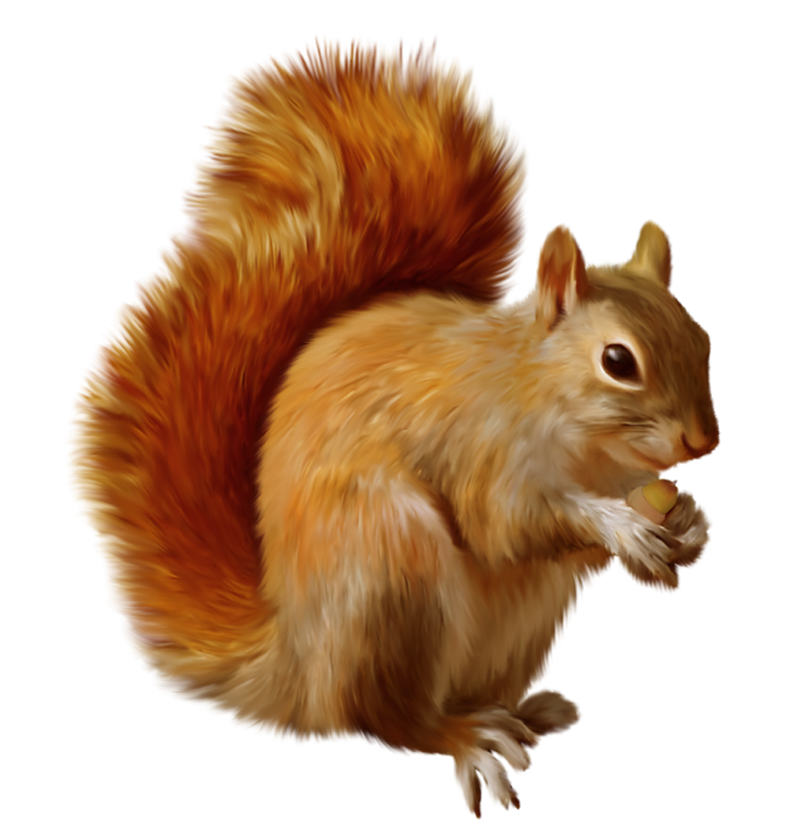 Squirrel Png - Squirrel PNG Clipart