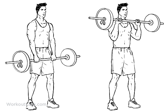 Barbell Curl Png - Standing Reverse Barbell Curls – WorkoutLabs Exercise Guide
