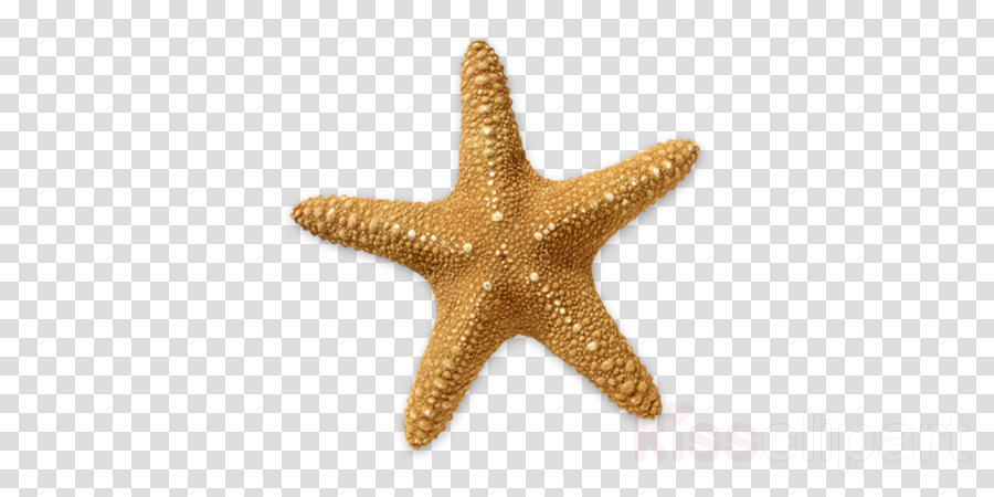 Starfish On Beach Png - Starfish, Beach, Transparent Png Image & #393468 - PNG Images - PNGio