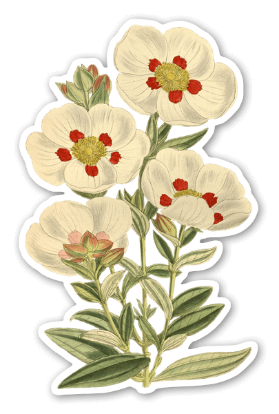 vintage flower stickers png free vintage flower stickers png transparent images 66294 pngio vintage flower stickers png transparent
