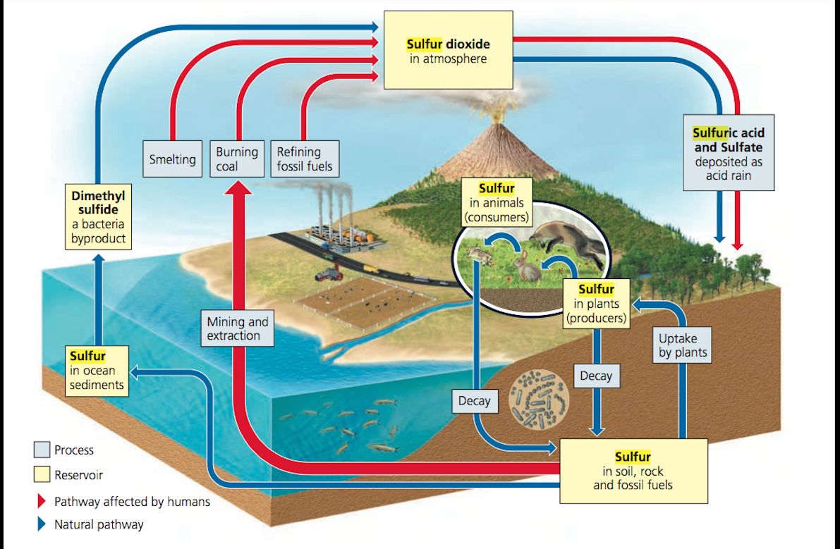 Sulfur Cycle Png - Sulfur Cycle.pptx by on emaze