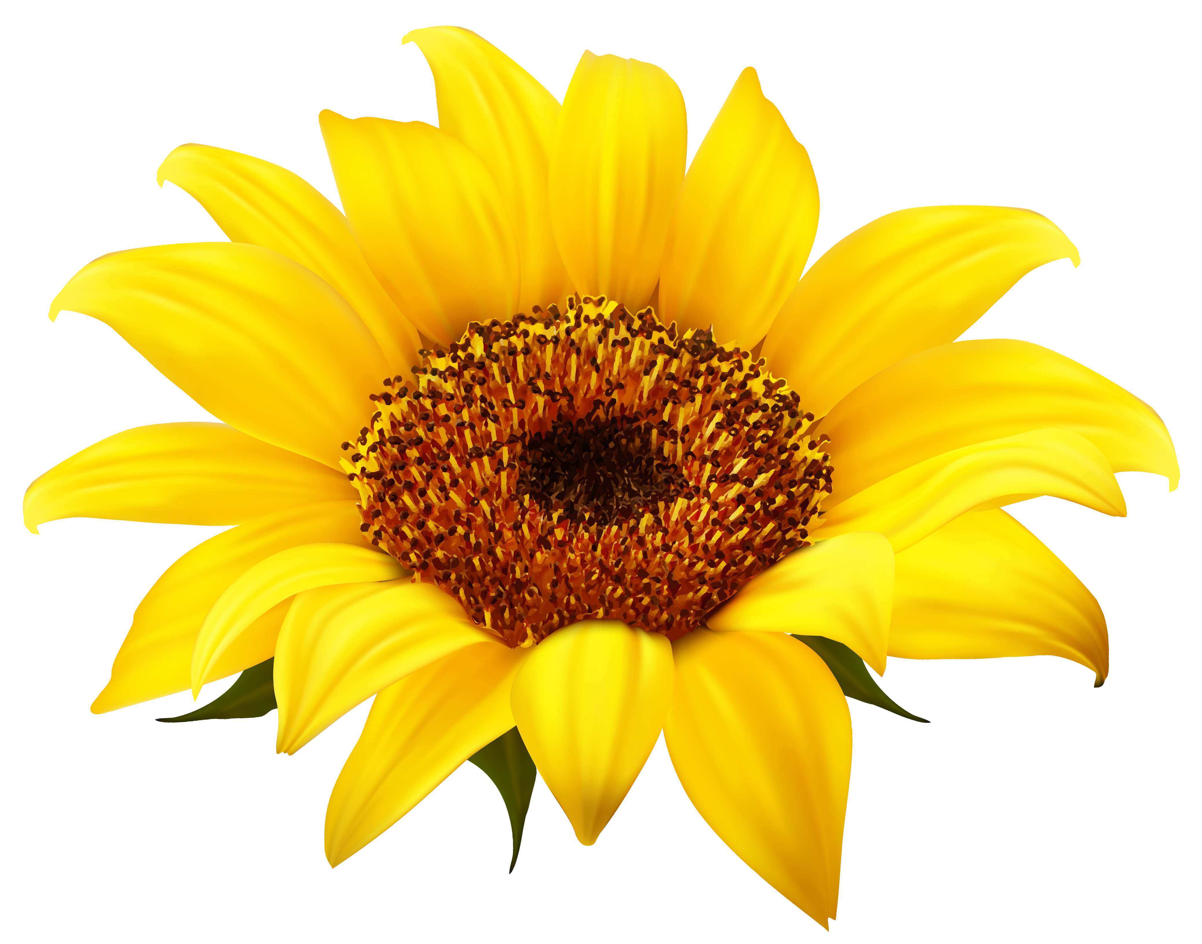 Fall Sunflower Png - Sunflower Clipart PNG Image | Gallery Yopriceville - High-Quality ...