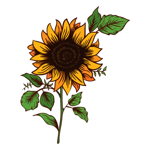 Sunflower Drawing Png - Sunflower drawing - Transparent PNG & SVG vector