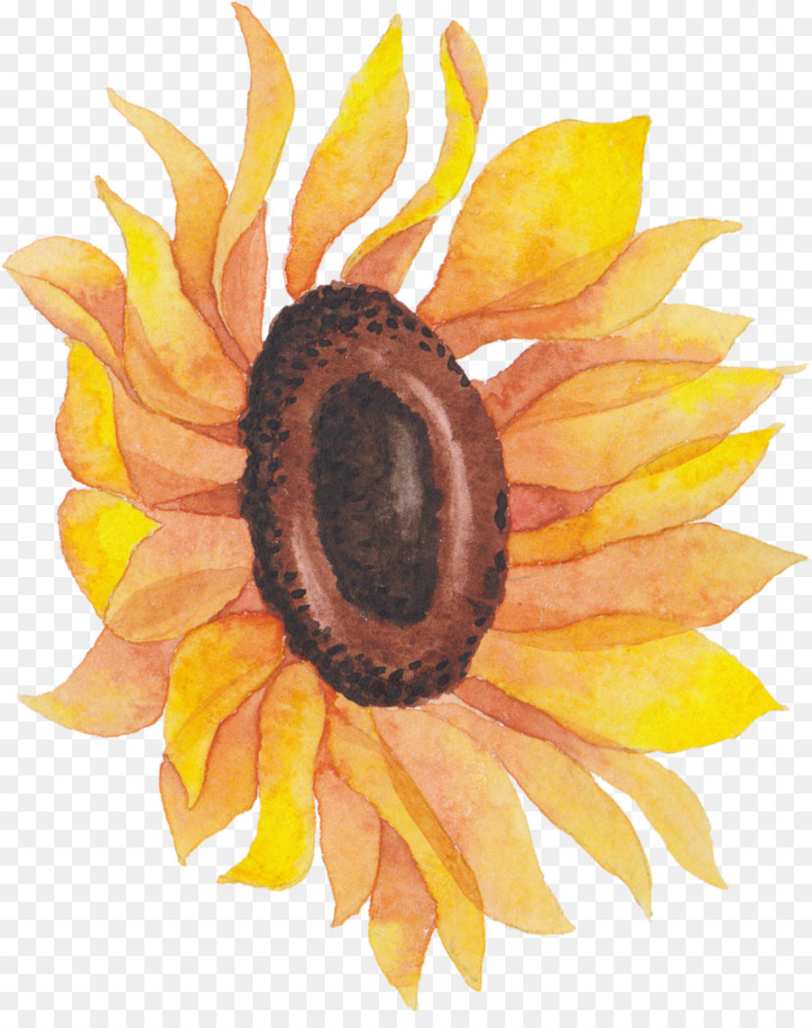 Common Sunflower Png - Sunflower, Flower, transparent png image & clipart free download