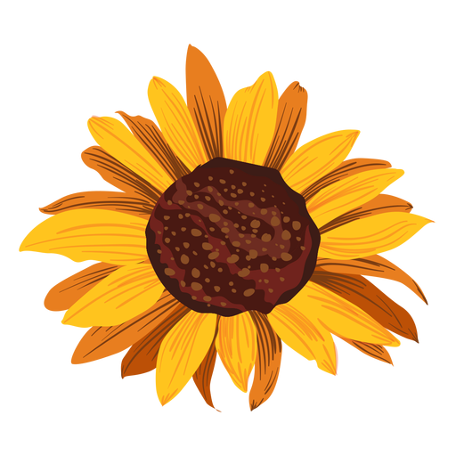 Sunflower Drawing Png - Sunflower head drawing - Transparent PNG & SVG vector