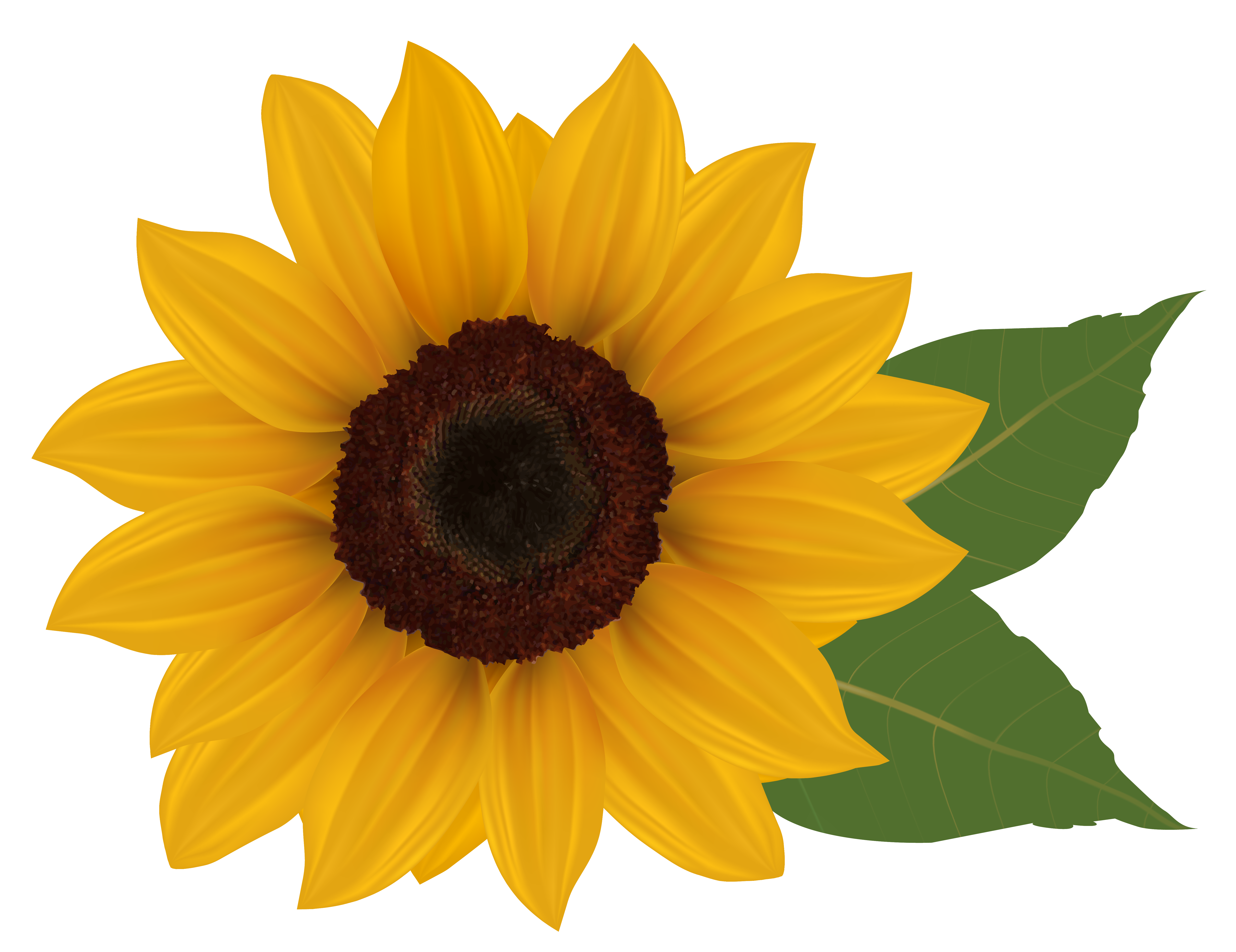 Fall Sunflower Png - Sunflower PNG Clipart Picture | Gallery Yopriceville - High ...