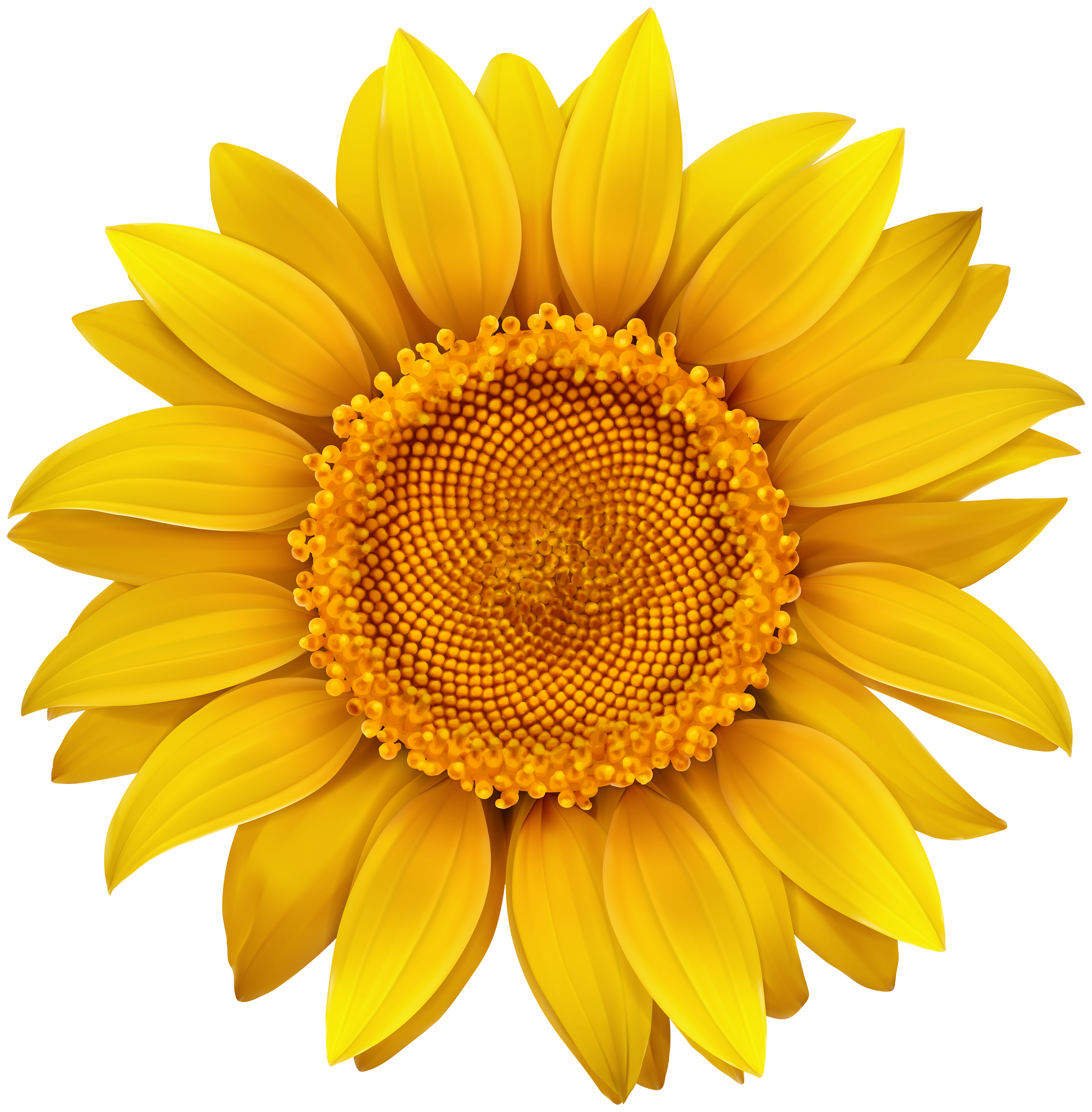 Fall Sunflower Png - Sunflower PNG Image​ | Gallery Yopriceville - High-Quality Images ...