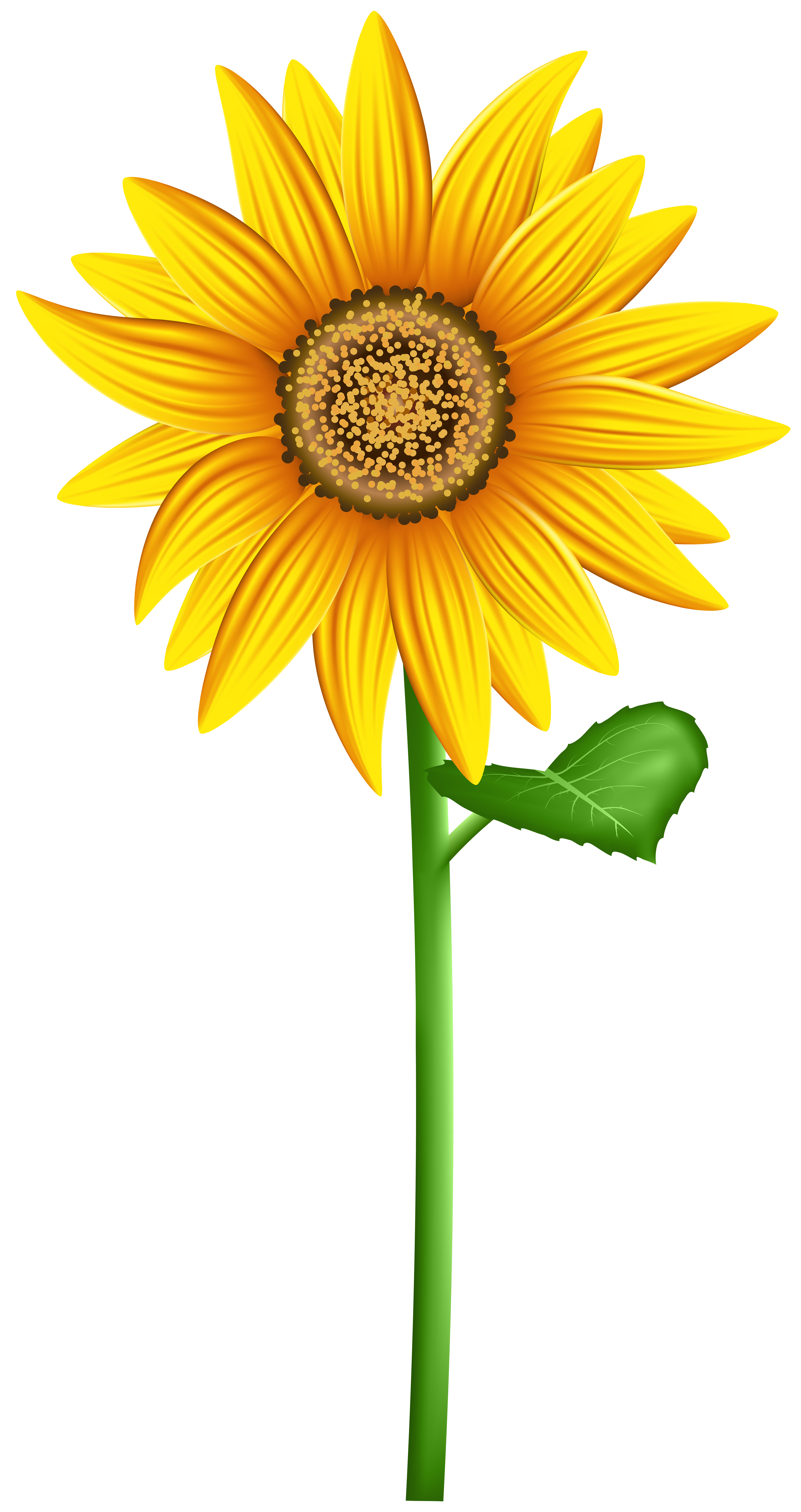 Fall Sunflower Png - Sunflower PNG Transparent Clip Art Image | Gallery Yopriceville ...