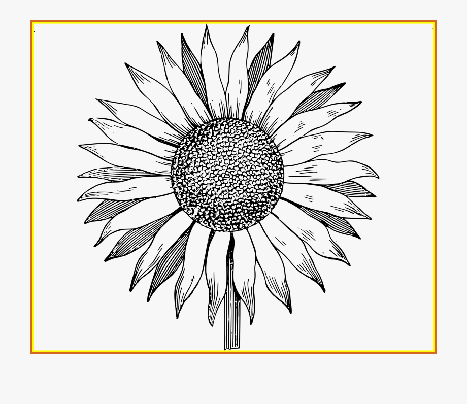 Sunflower Black And White Png - Sunflowers Clipart Outline - Sunflower Clipart Black And White Png ...