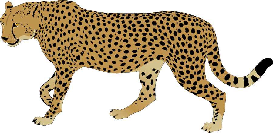 Rainbow Cheetah Png - Svg Freeuse Library Cheetah Rainbow Free Collection - Cheetah ...