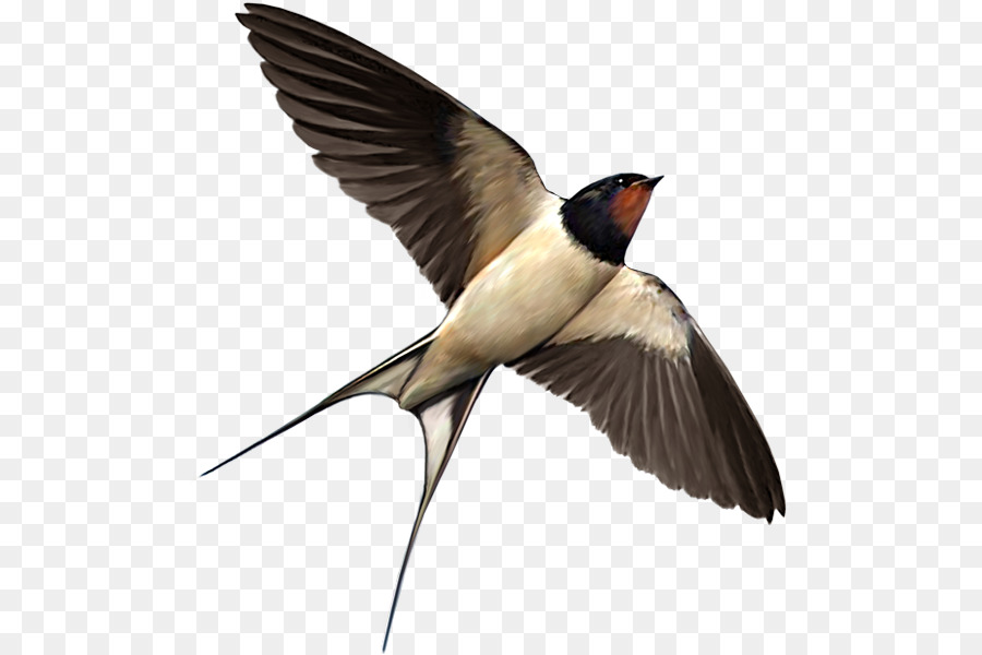 Swallow Png - Swallow Bird