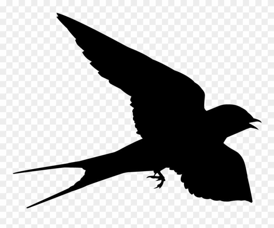 Swallow Png - Swallow Clipart Silhouette - Swallow Shape - Png Download ...