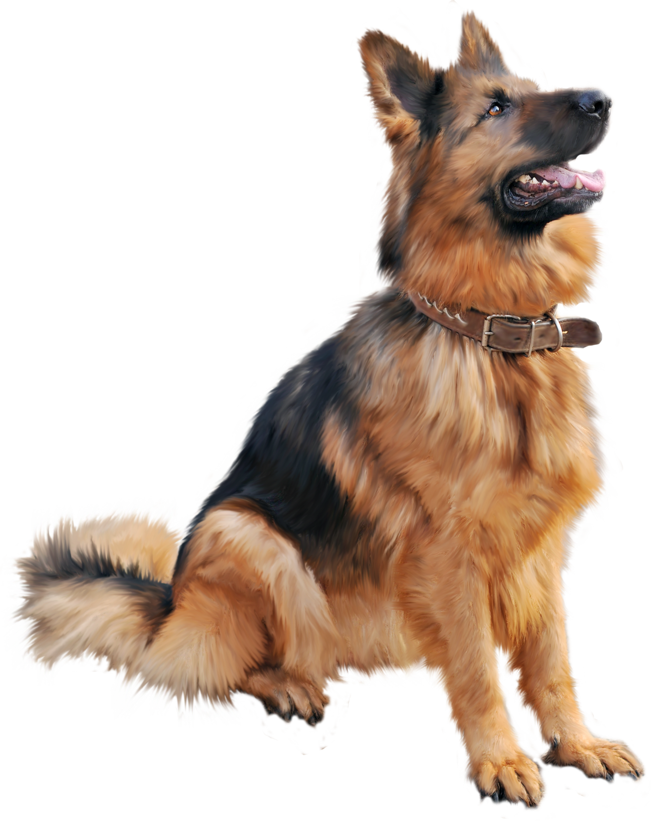 Dog Png - Teaching your dog tricks is a great way to boost his mental agitation, and  it allows the two of you to connect. ** Find out more at the image link.