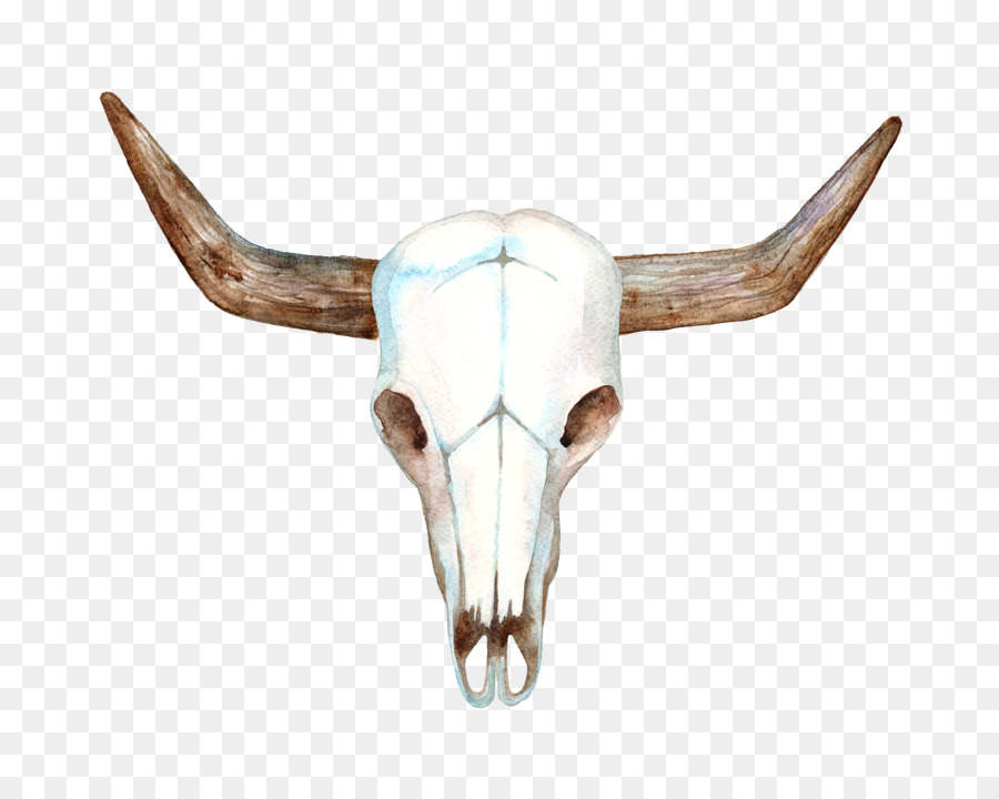 Texas Longhorn Cows Sk 89990 Png Images Pngio