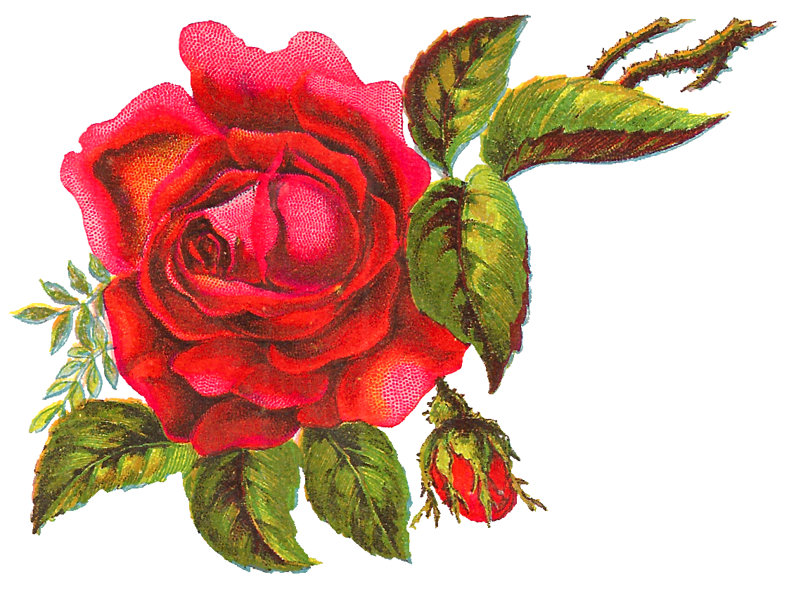 Tiny Rose Png - The big red rose is surrounded by bright leaves, parts of a stem, and a tiny  rose bud, making for a visually stunning rose image.