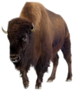 Native American Buffalo Png - The Story of the Buffalo | Native american folklore, Plains ...