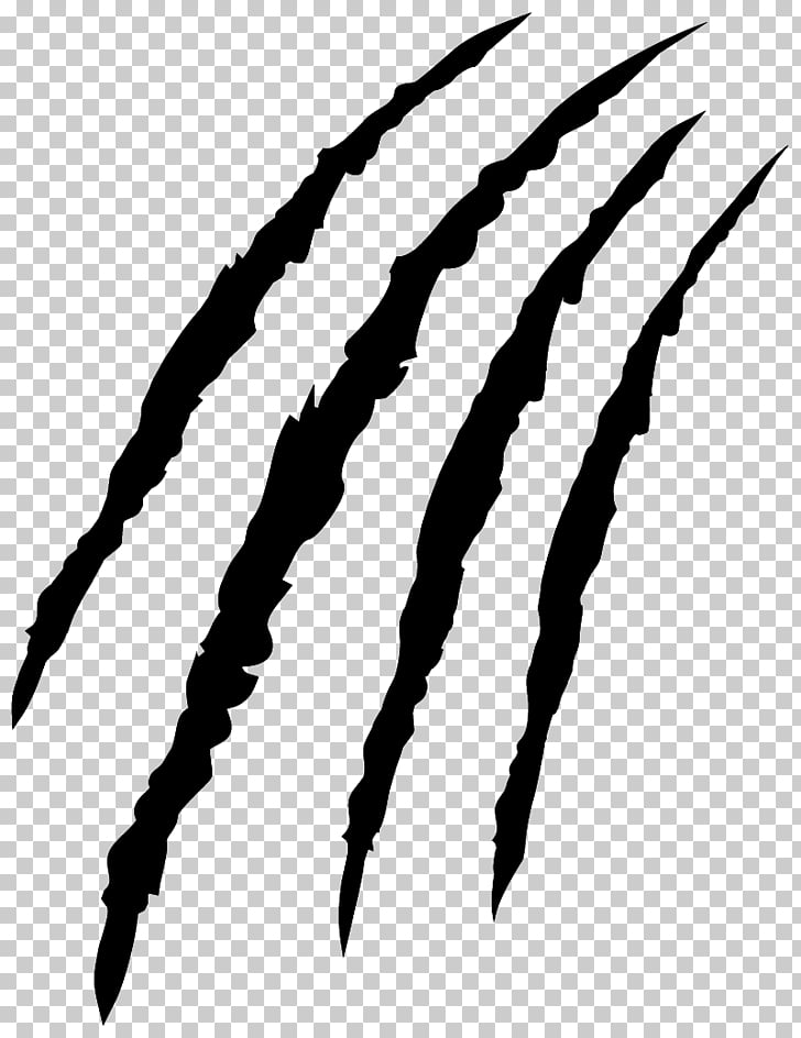 Tiger Claw Scratch Png - Tiger Claw Felidae Cat Paw, scartch, scratch art PNG clipart ...