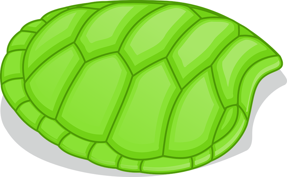 Tortoise Shell Png - Tortoise Patterns Shell - Free vector graphic on Pixabay