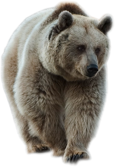 Bear Png - Transparent Brown Bear PNG Picture