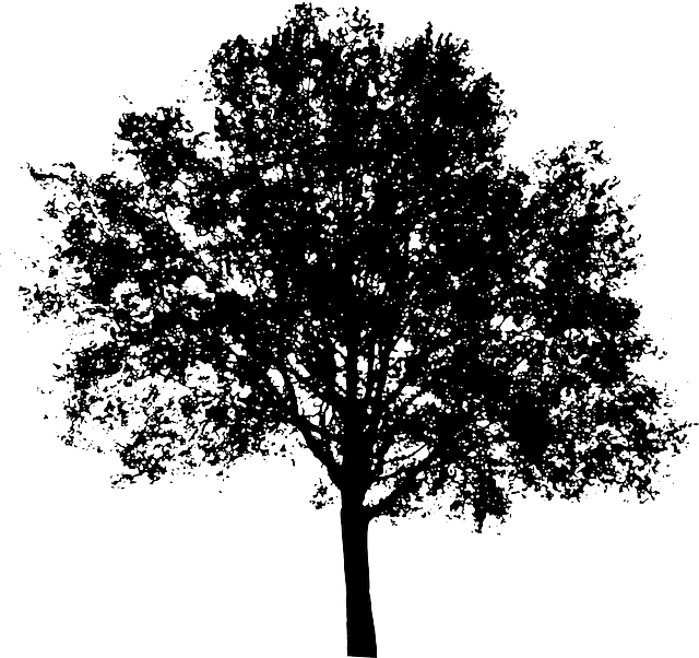 Black And White Trees Png & Free Black And White Trees.png ...