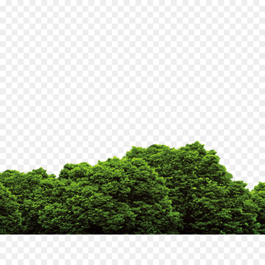 Forest Pngs - Tree - Forest Png Download - 1200*1200 - #474069 - PNG Images - PNGio