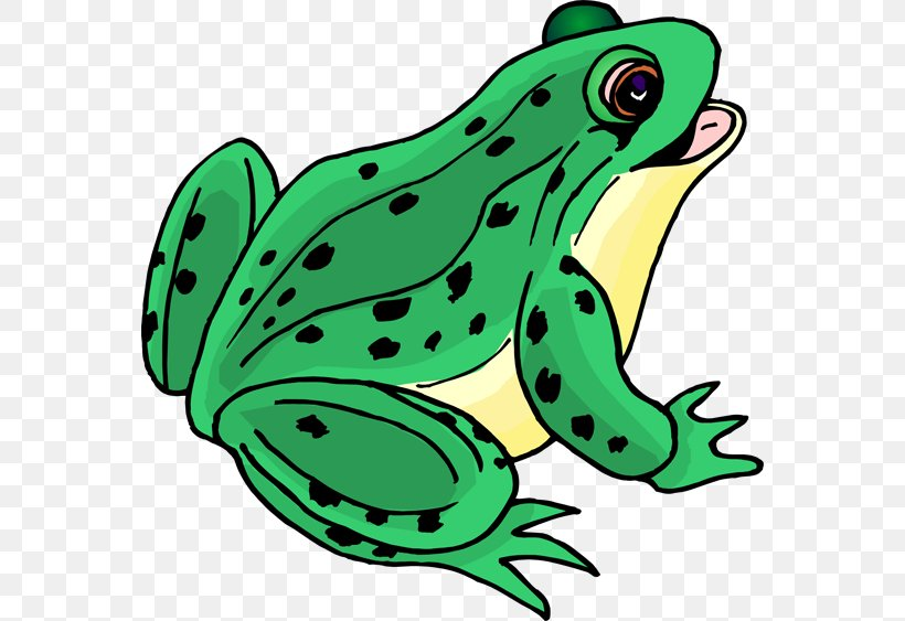 Green Frog Clip Png - Tree Frog Clip Art, PNG, 564x563px, Frog, Amphibian, Animation ...