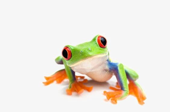Shrub Frog Png - Tree Frog PNG, Clipart, Cute, Cute Frog, Frog, Frog Clipart, Frog ...