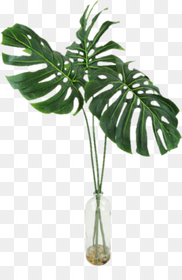 Philodendron Png - Tree Philodendron png free download - Areca palm Arecaceae ...