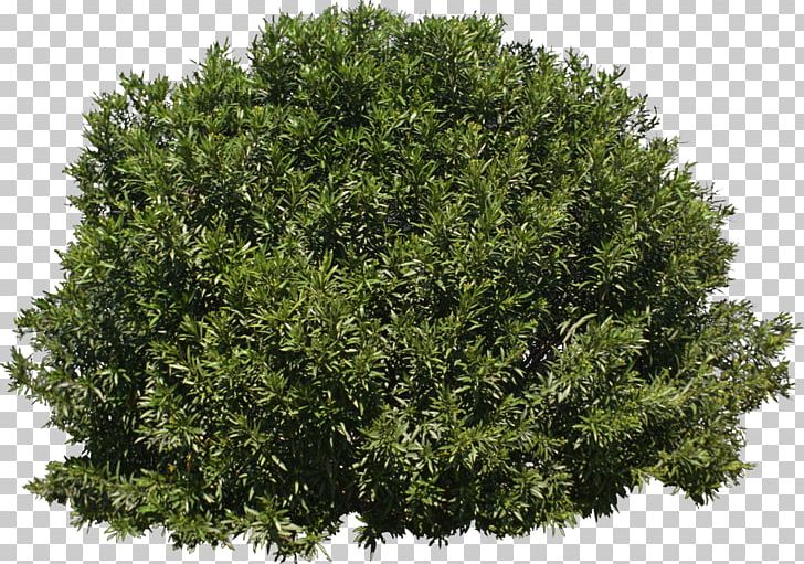 Png Bushes - Tree Shrub Evergreen PNG, Clipart, Branch, Bushes, Data Conversion ...