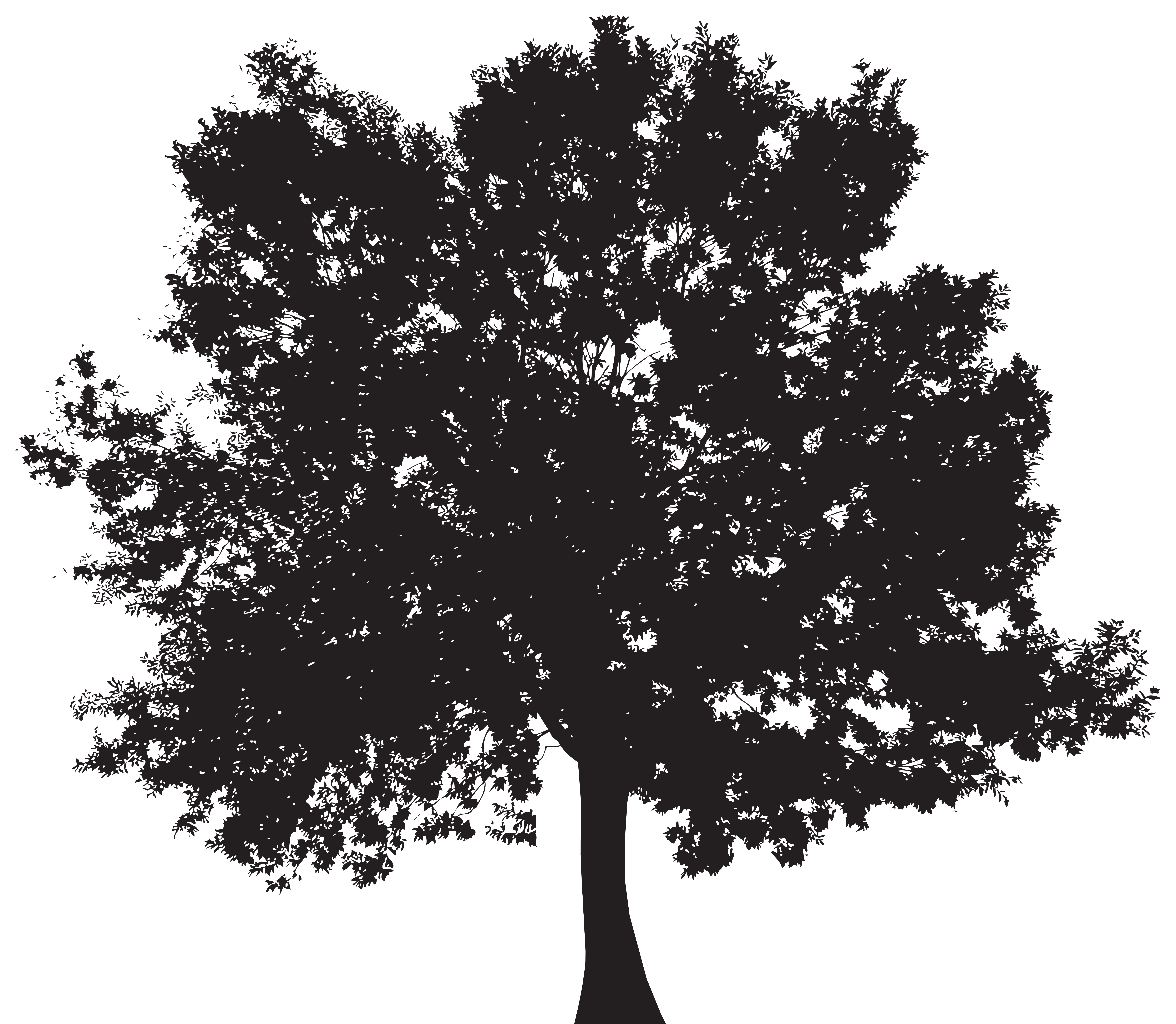 Tree Silhouette Png & Free Tree Silhouette.png Transparent ...