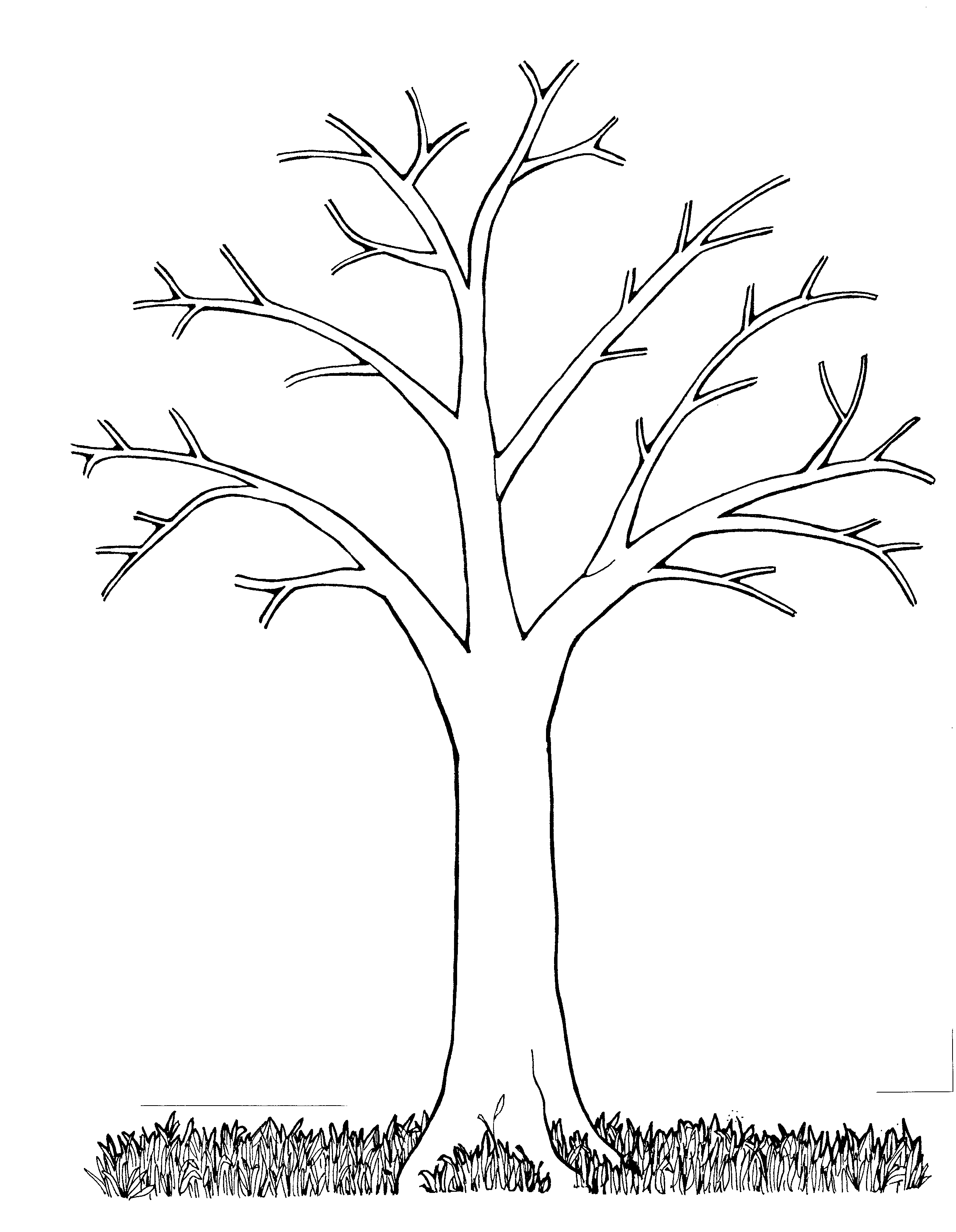 Tree Trunk Line Drawing At GetDrawings.c #19 - PNG Images - PNGio