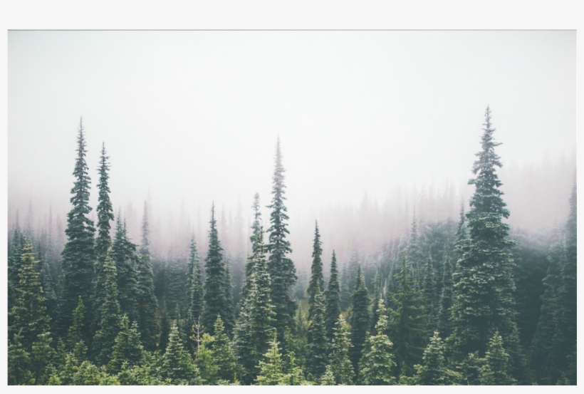 Forest Tree Tops Png - Trees Forest Treetops Overlay Background - Pine Tree Forest ...