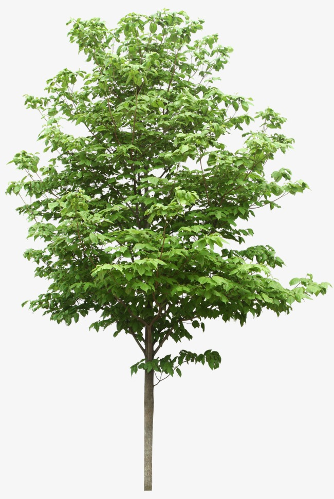 Tree Png & Free Tree png Transparent Images #239 - PNGio