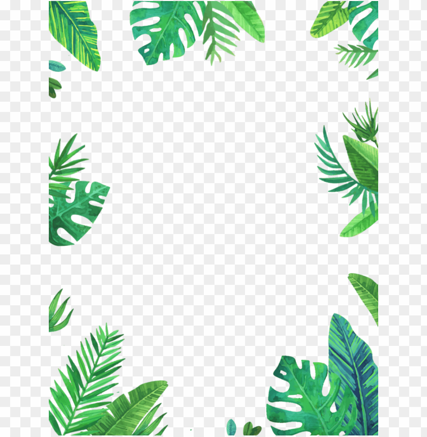 Tropical Background Png - tropical frame PNG image with transparent background | TOPpng