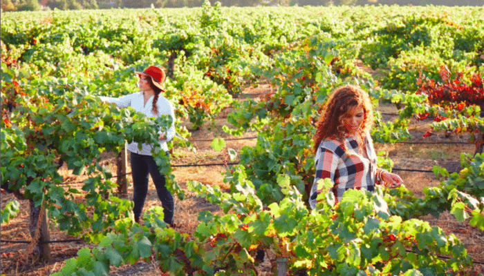 California Wine Png - Truvee Wines by the McBride Sisters: A Black Owned Winery!