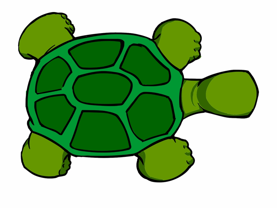 Tortoise Shell Png - Turtle Top View Animal Green Png Image - Tortoise Shell Cartoon ...