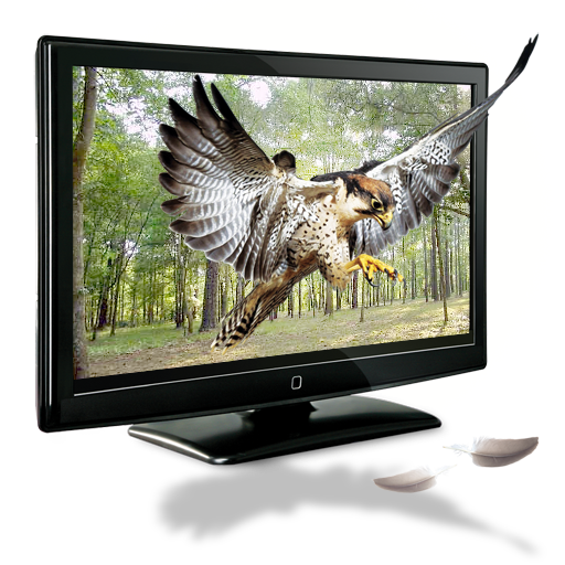 3d Television Png - tv | Royalty free stock PNG images for your design