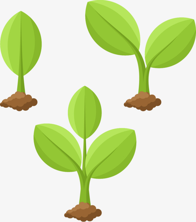 Plant Vector Png Free Plant Vector Png Transparent Images 35806