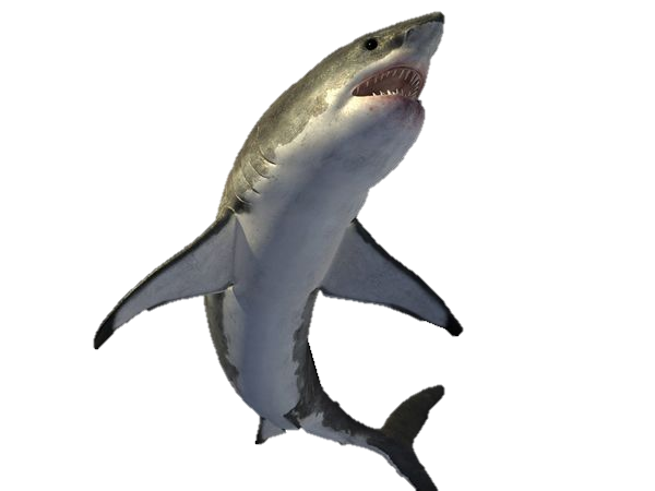 Requiem Shark Png - Vertebrate,Shark,Fish,Fin,Requiem shark,Cartilaginous fish ...