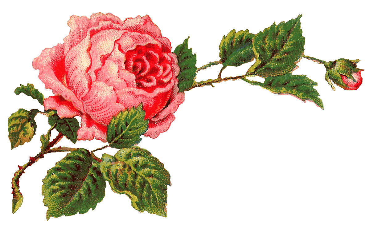 Victorian Rose Png - Victorian Vintage Roses On A Branch transparent PNG - StickPNG