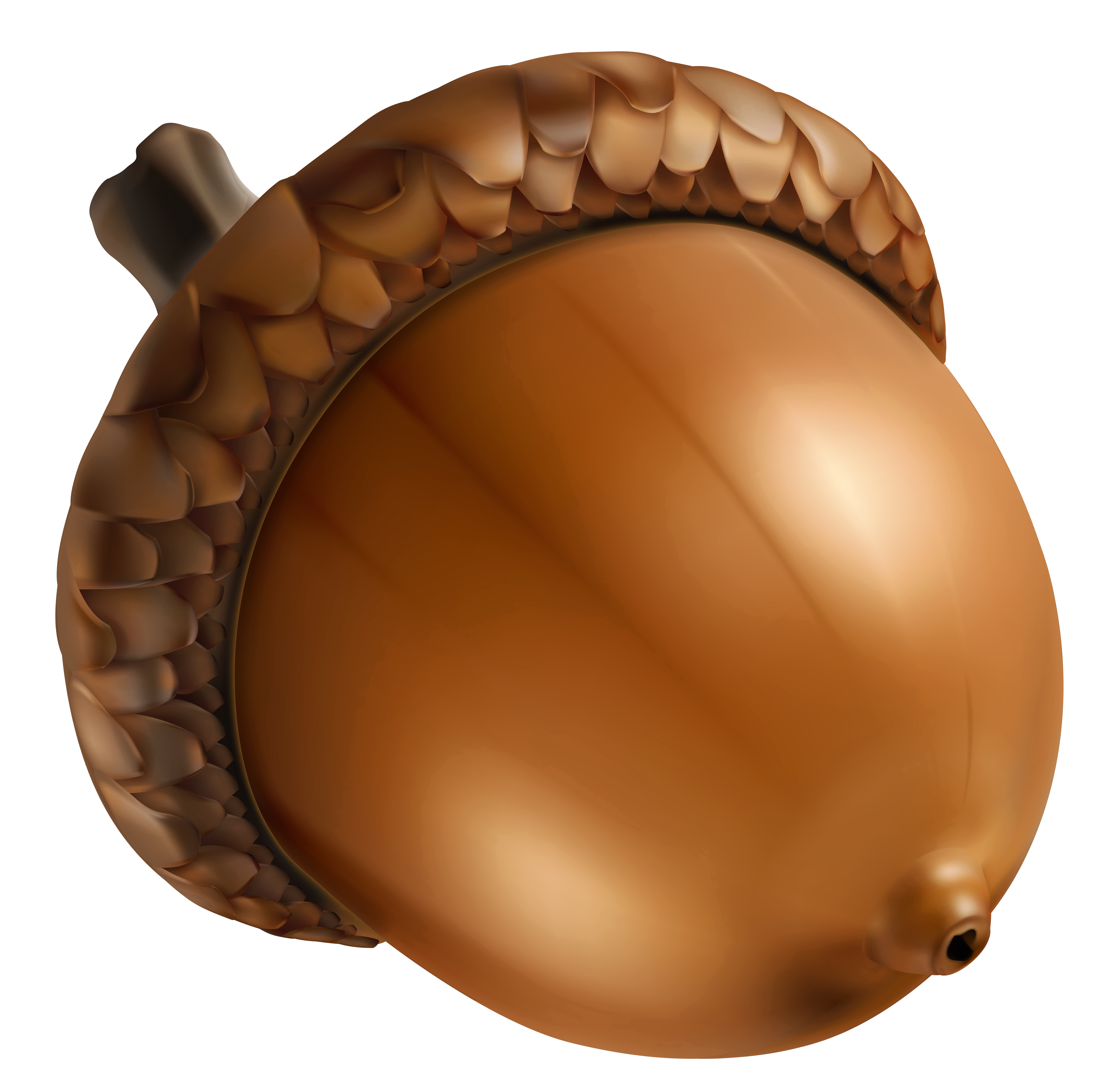 Acorn Png - View full size ?