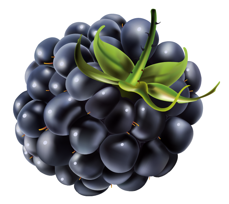 Blackberry Fruit Png - View full size ?