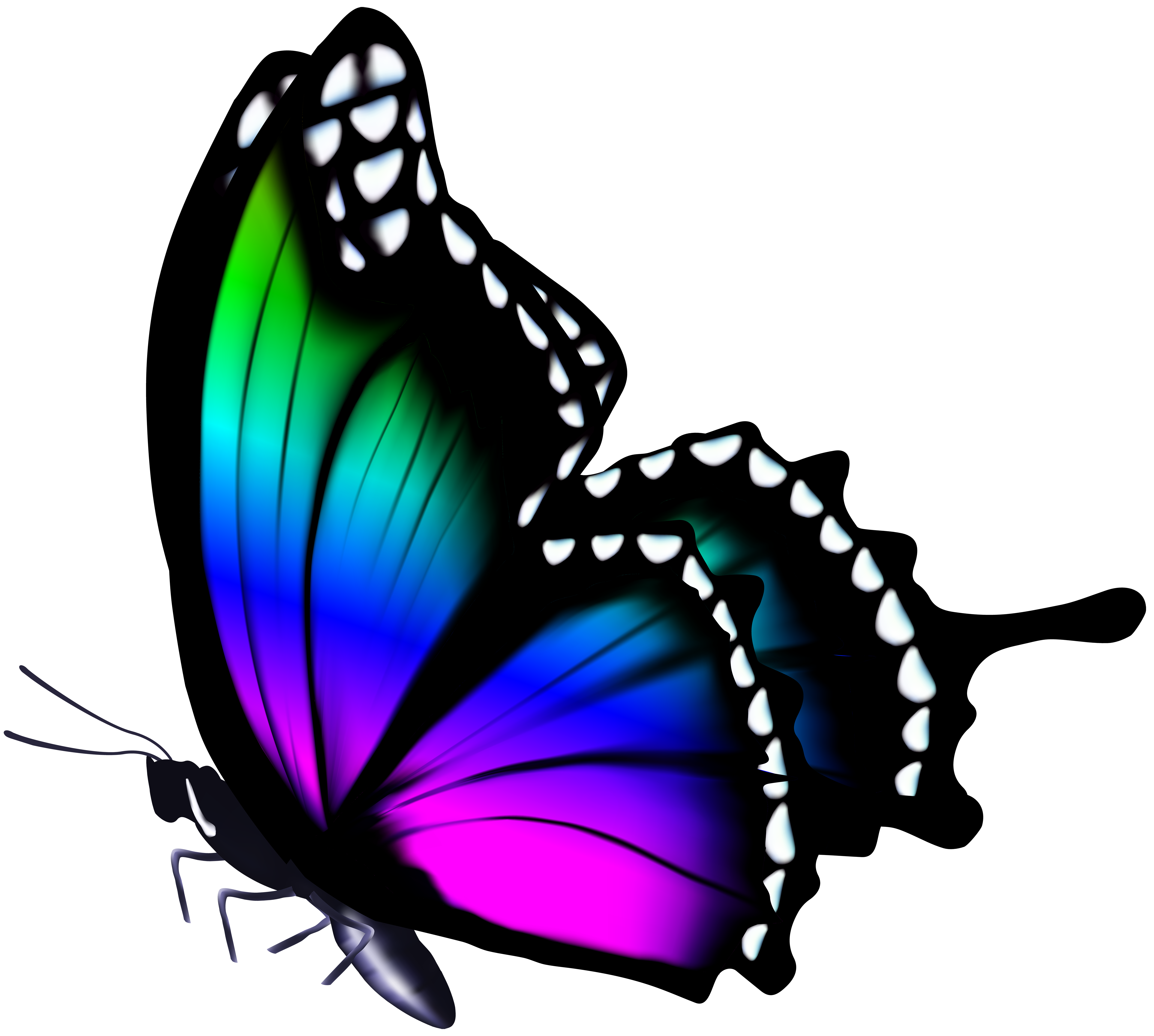 Butterfly Png - View full size ?