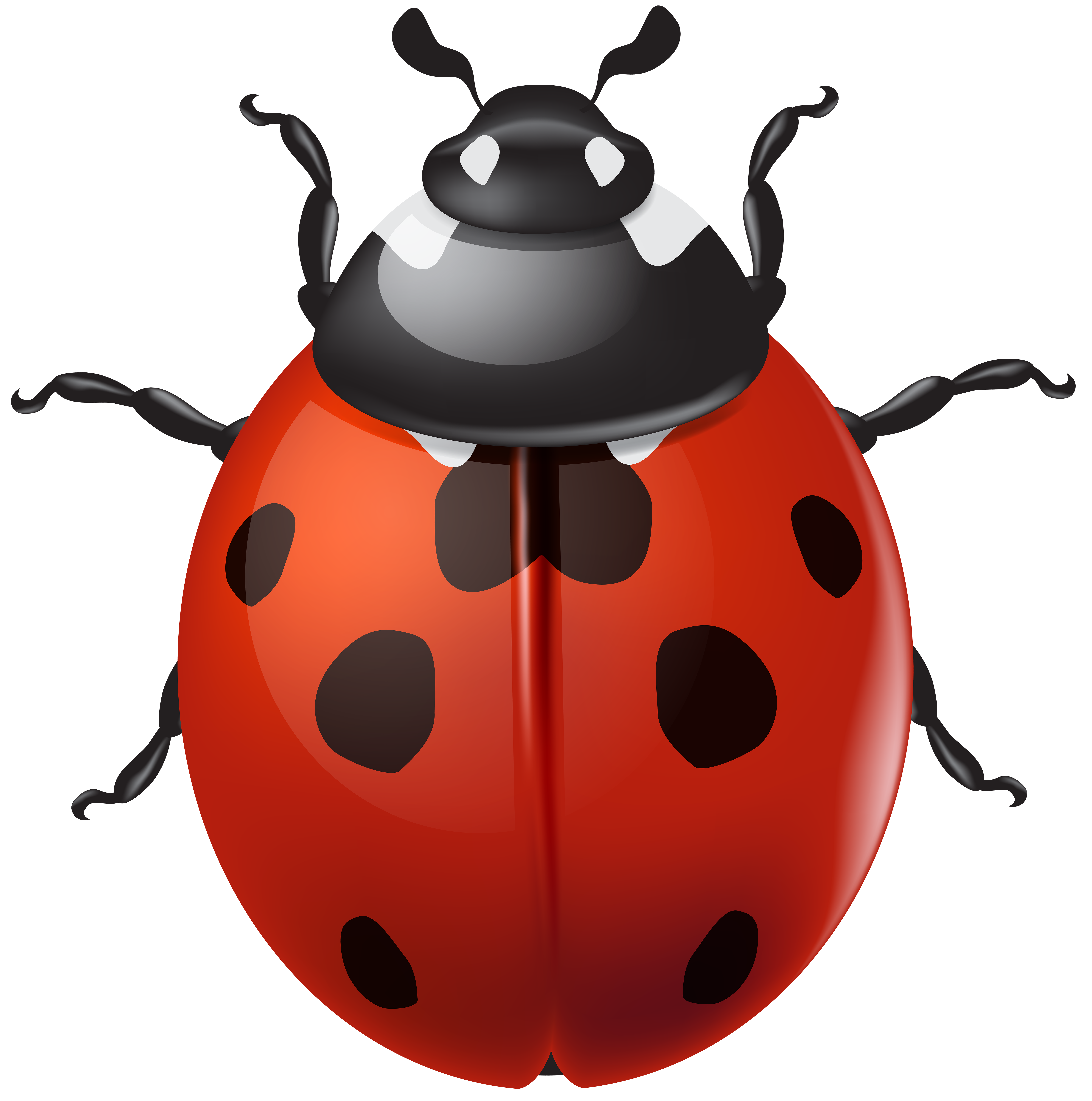 Ladybug Png - View full size ?