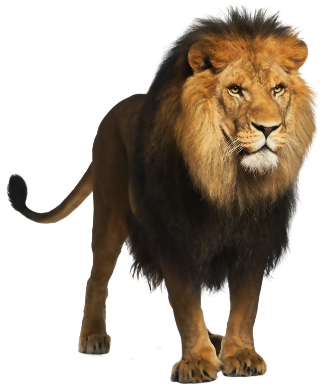 Lion Png - View full size ?