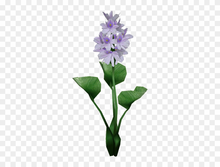 Hyacinth Png - Water Hyacinth Png, Transparent Png - 559x559(#4253468) - PngFind
