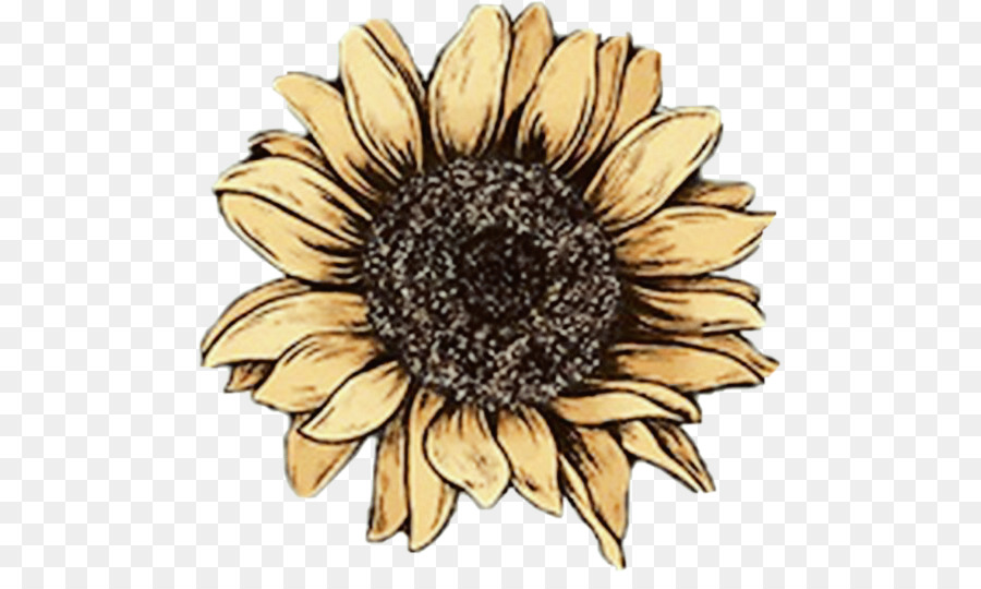 Sunflower Drawing Png - Watercolor Flower Background