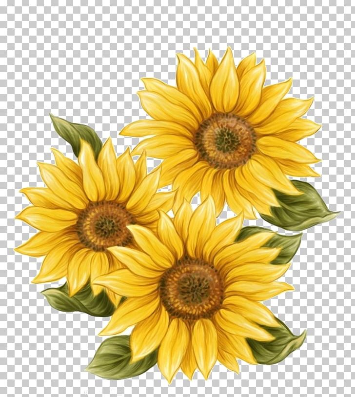 Sunflower Drawing Png - Watercolor Painting Common Sunflower Drawing PNG, Clipart, Annual ...