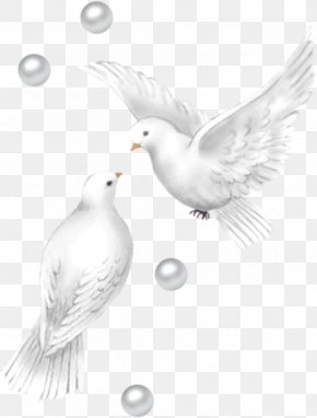 Wedding Ducks Png - Wedding Ducks Images, Wedding Ducks Transparent PNG, Free download