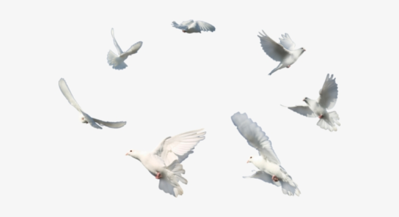 Dove Flying Png - Wedding White Dove Png - Flying Dove Png Transparent Transparent ...